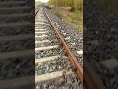 Elephant Crossing Bishnupur Gokulnagar Railway Track