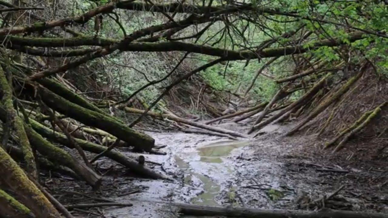 kerek folyók taxonómiája