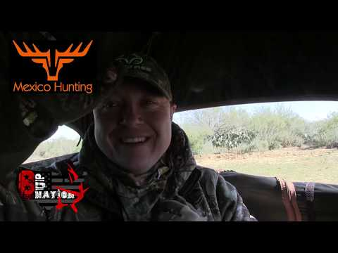 Hog Hunt In Mexico