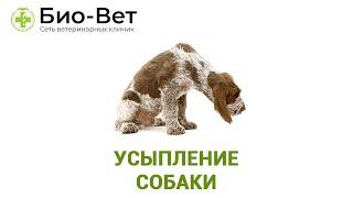Усыпление собаки. Ветеринарная клиника Био-Вет.