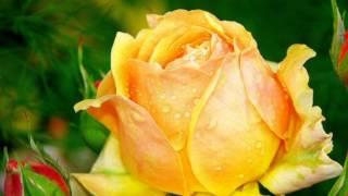 Эти прекрасные цветы для ТЕБЯ!!!