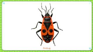 Карточки Домана.  Изучаем английский язык.  Насекомые и пауки.  Insects and spiders.