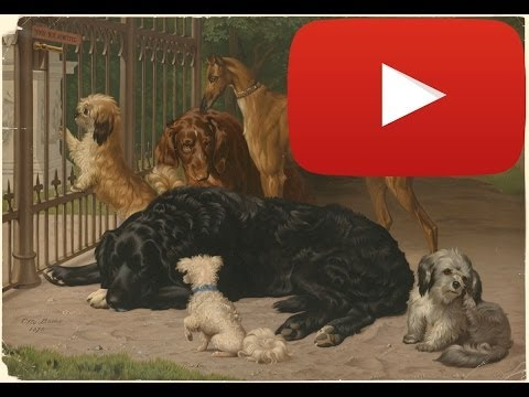 HBDC's Randall: The Dogs of #YouTubeSpaceLA (PART I of III)
