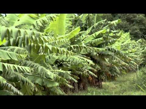 Documental Mbya Guarani (Ka'asapa, Paraguay)