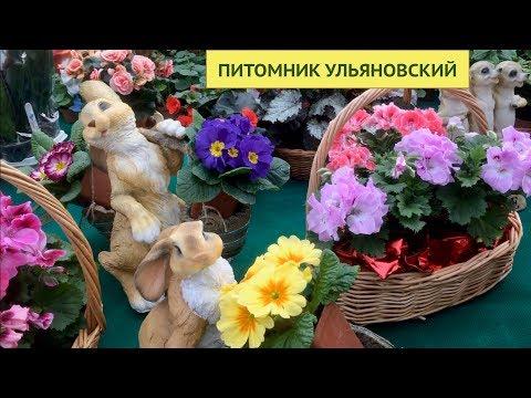 ПИТОМНИК РАСТЕНИЙ УЛЬЯНОВСКИЙ. Московская область.