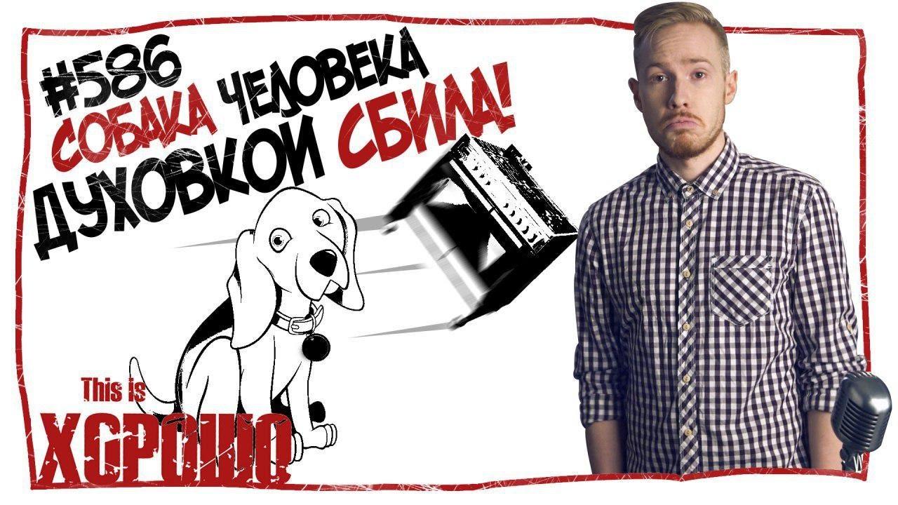 This is Хорошо Собака человека духовкой сбила! #586