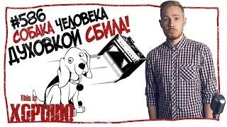 Собака человека духовкой сбила! #586