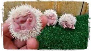 МАЛЕНЬКИЕ ЖИВОТНЫЕ (приколы с животными) | BABY ANIMALS (fun with animals) #569