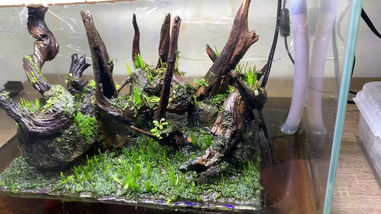 Nano forest aquascape with moss - YouTube