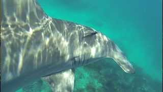 Huge 10 ft Hammerhead Shark Bumps Diver in Florida Keys! || Islamorada Shark Encounter