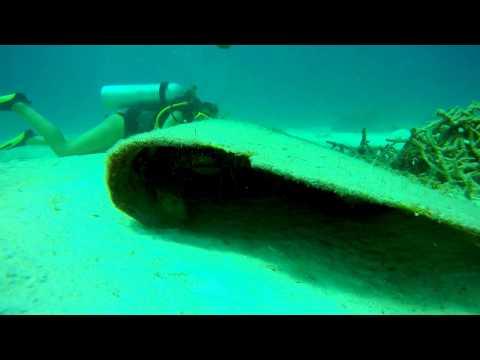 Scuba diving ocean wildlife Bahamas