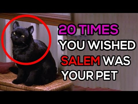 20 Times You Wished Salem Was Your Pet
