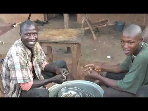 Life of cacao farm in Ivory Coast