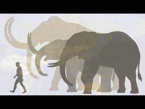 Hendrik Poinar: Bring back the woolly mammoth