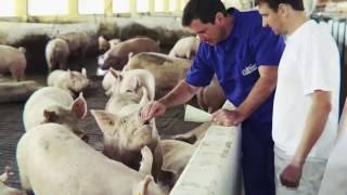 Topigs Norsvin - a granja mais moderna da América Latina