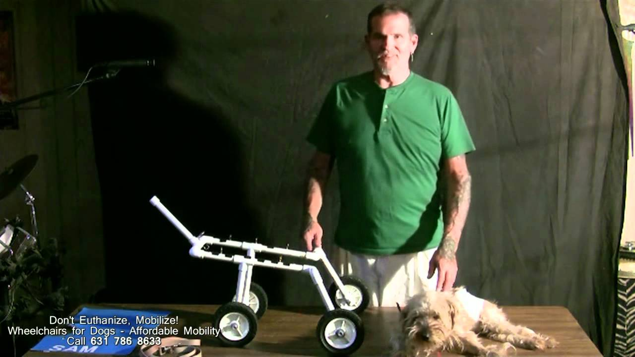 wheelchairs for dogs youtube