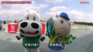 2015年10月4日、園田競馬場にてレースコースをマラソンランナー...