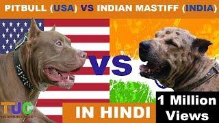 PITBULL VS INDIAN MASTIFF in hindi | Dog Comparison | The Ultimate Channel