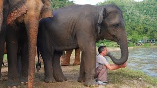 The Elephant Whisperer - Man and Elephant are Best Friends