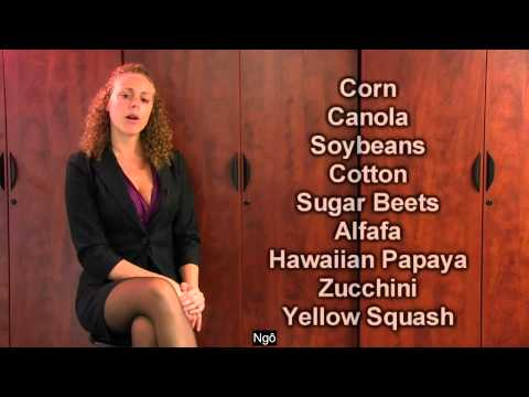 05 - GMO Foods How To Tell, Truth About Genetically Modified Foods & Label GMO(Phụ đề Việt)
