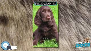 Field Spaniel  Everything Dog Breeds
