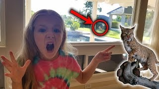 Bobcat Attacks Bird in Our BackYard! Family Game Night with Shark Bite!!