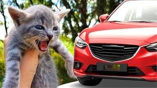 СПАСЛИ КОТЕНКА под колесами автомобиля! Спасение котенка Недостающий момент ВИДЕО для детей