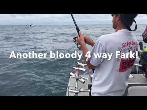 King Fish In Melbourne With Matt Cini