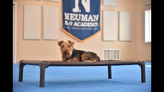 Finn (Welsh Terrier) Boot Camp Dog Training Video Demonstration