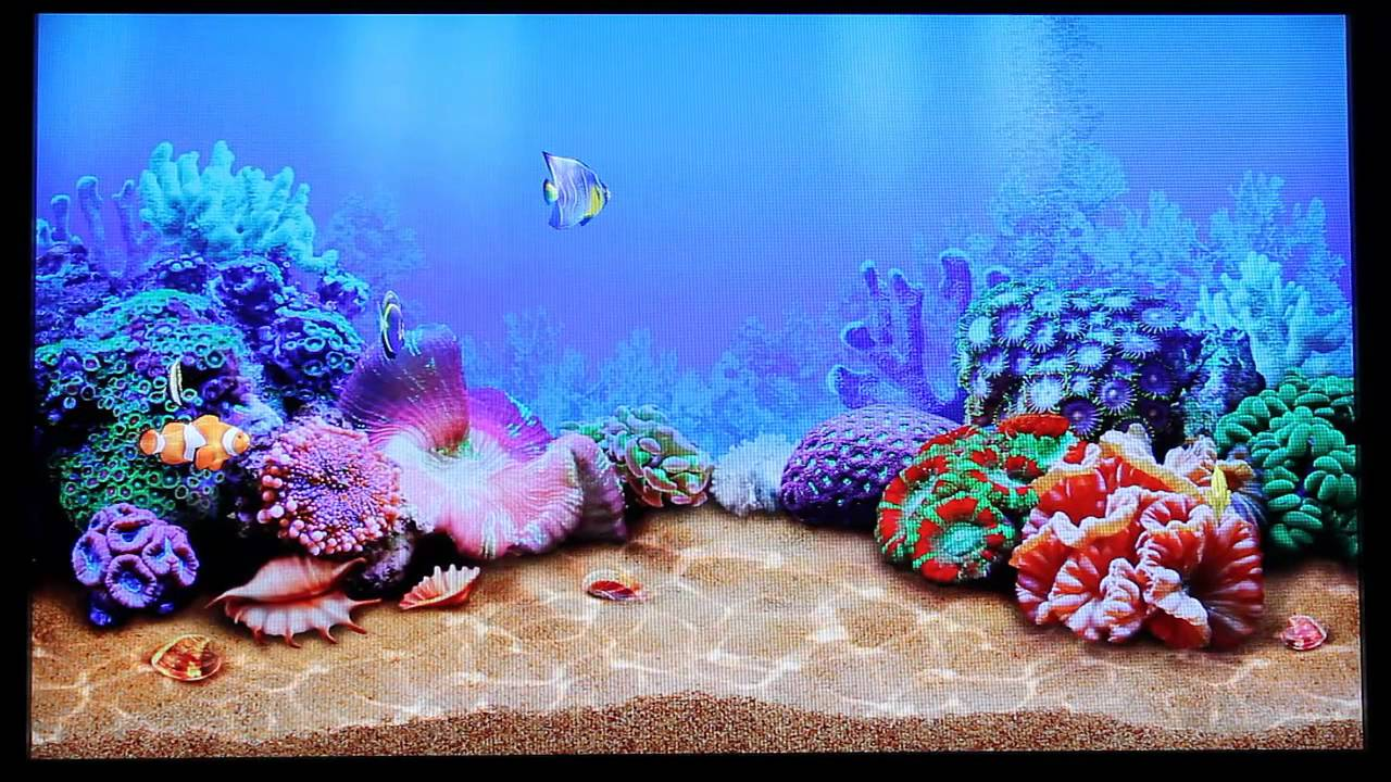 Lg Animated Wallpaper Google Tv Aquarium Aquatica 3d Screensaver Youtube