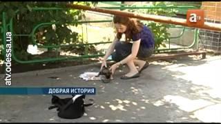 Молодая кошка приютила и выкармливает щенка