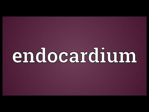 Endocardium Meaning