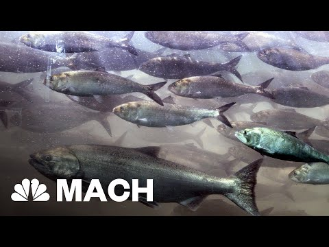 Scientists Can Now Determine the Population Of A River With A Few Drops Of Water | Mach | NBC News