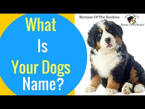 What Did You Name Your Dog? (And Why?)