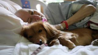 """pawsitive Pals"" San Diego Hospice Pet Therapy Program"