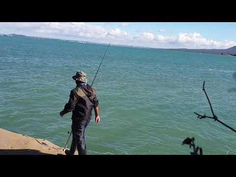 Rock fishing Auckland