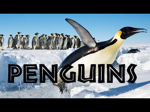 All About Penguins For Kids: Penguins Of The World For Children - FreeSchool