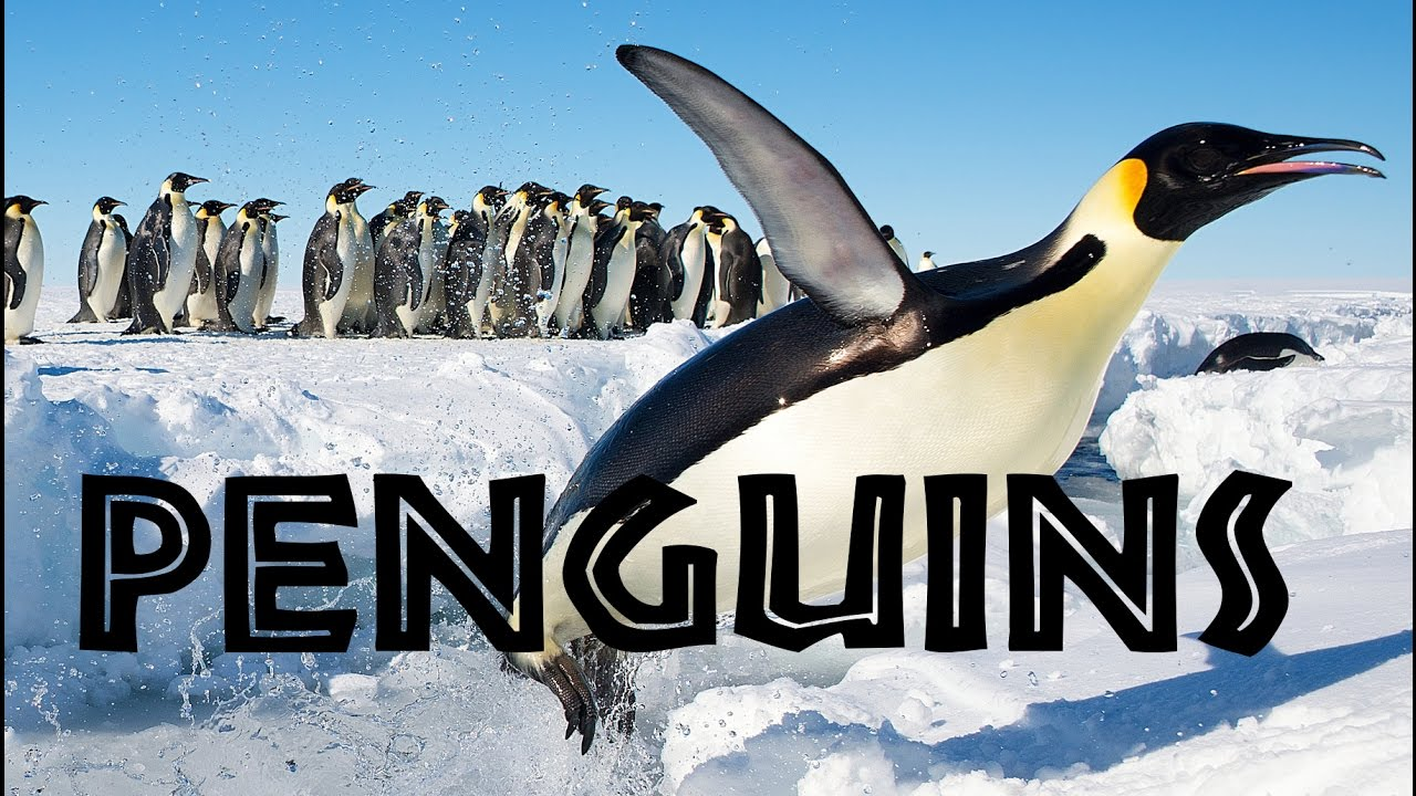 all about penguins for kids penguins of the world for children