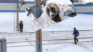 Сбитый поездом щенок двое суток на морозе ждал помощи help puppy