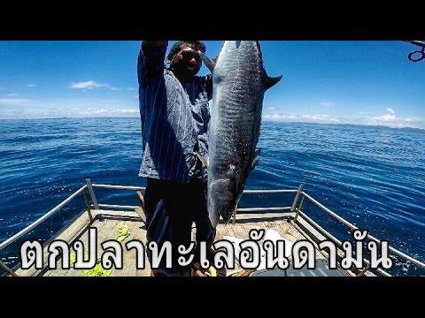 ตกปลาทะเลอันดามัน#3 ปลาอินทรีย์ ปลาข้างไฝ Fishing & hand line fishing @Andaman Sea