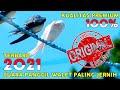Suara Panggil Walet Jernih Kualitas Super Langsung Bersarang Akau  Mp3 - Mp4 Download