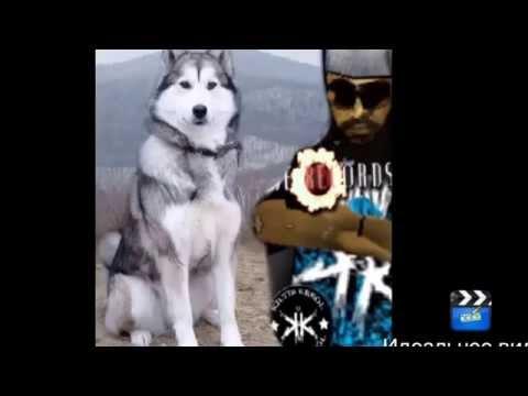 Фото собак породы лайка и что то такое...
