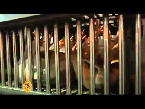 Pestilence  20000 dead Pigeons as H7N9 Bird Flu Virus spreads throughout China 4 6 13