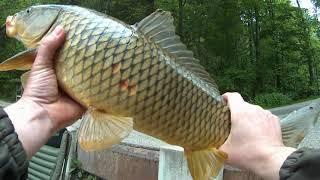 На рыбалке с сыном поймали карпа Alatsee озеро Алат