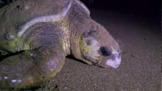 Turtle Season on LEI with David Whitehill Thumbnail