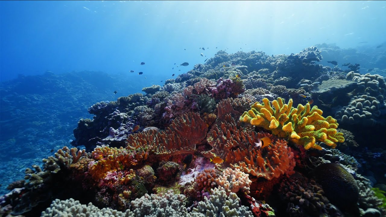 FIJI   Kadavu Island scuba diving the Great Astrolabe Reef - YouTube