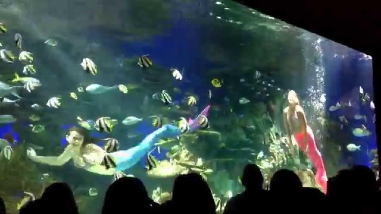 Fish in ripleys aquarium - Mermaid Show At Ripley S Aquarium Of The Smokies Plus Baby Stingrays And Penguins Eating Fish Youtube