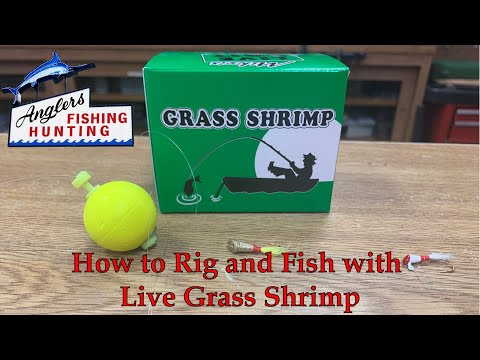 How To Rig And Fish Live Grass Shrimp