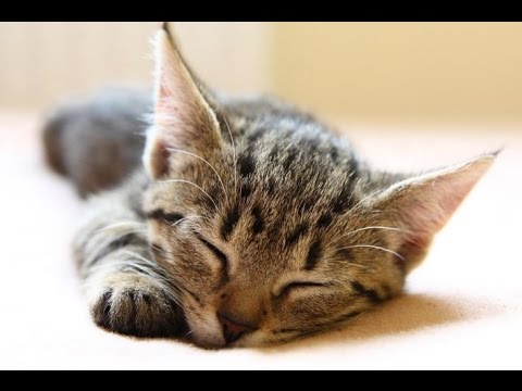 Relaxing Sleep Music, Calm Music, Soft Music,  Instrumental Music, Sleep Meditation, 8 Hours, ☯2737