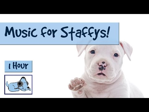 Staffy Music! Music for Your Staffordshire Bull Terrier, Calm Down Your Staffy! 🐶 #TERRIER06
